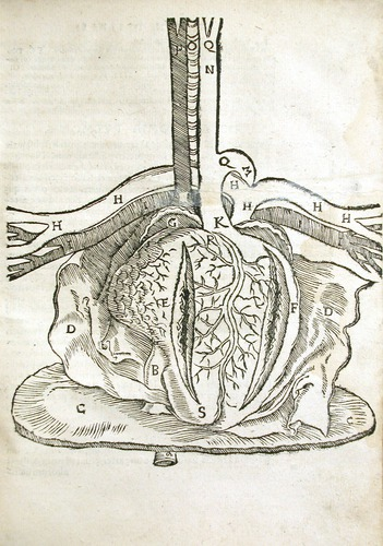 Image of MondinoDeiLuzzi-1541-l3r