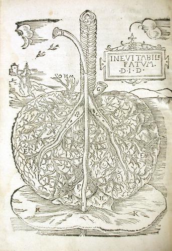 Image of MondinoDeiLuzzi-1541-l4v