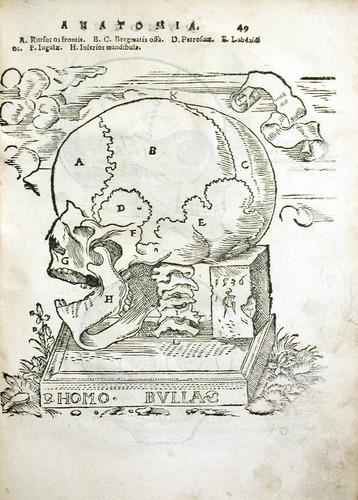 Image of MondinoDeiLuzzi-1541-o1r