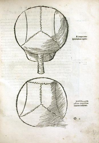 Image of MondinoDeiLuzzi-1541-o2r