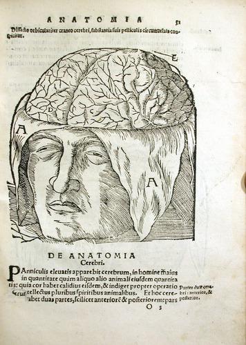 Image of MondinoDeiLuzzi-1541-o3r
