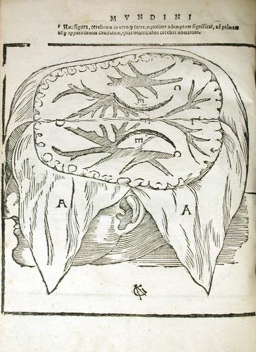 Image of MondinoDeiLuzzi-1541-p2v