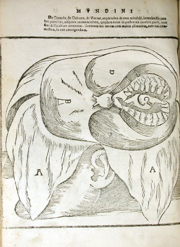 Image of MondinoDeiLuzzi-1541-p3v