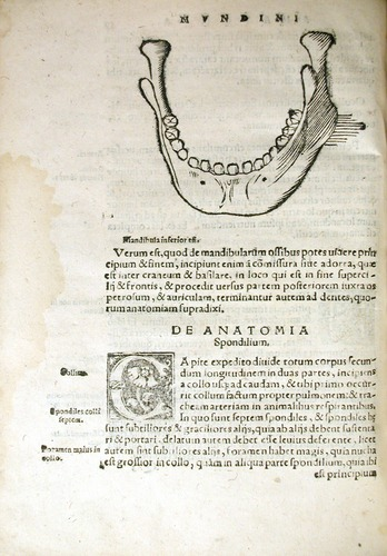 Image of MondinoDeiLuzzi-1541-q3v