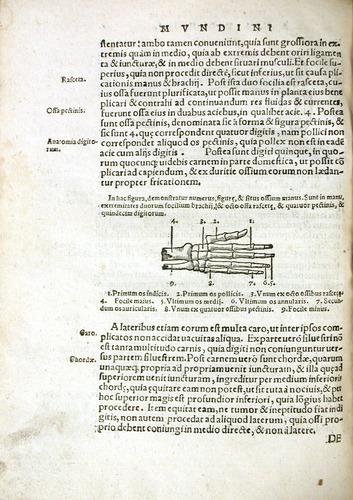Image of MondinoDeiLuzzi-1541-r1v