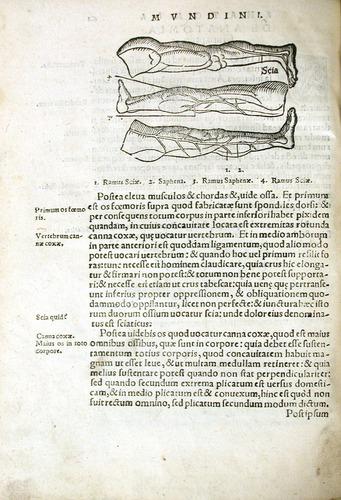 Image of MondinoDeiLuzzi-1541-r2v