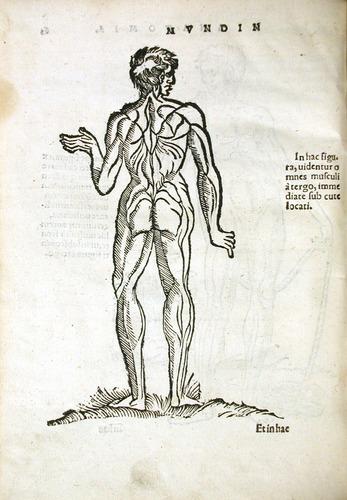Image of MondinoDeiLuzzi-1541-r4v