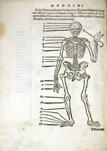 Image of MondinoDeiLuzzi-1541-s1v