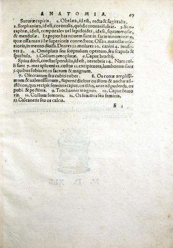 Image of MondinoDeiLuzzi-1541-s3r