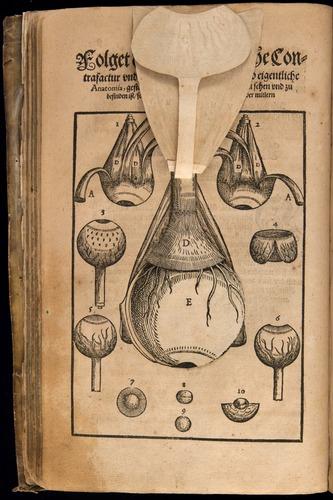 Image of Bartisch-1583-008v-b