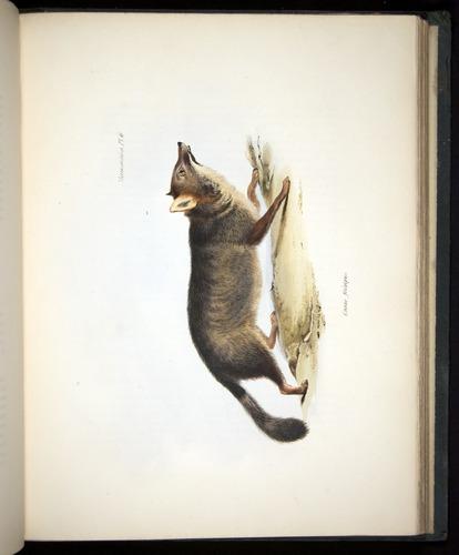 Image of Darwin-F8.1-1838-z0012-f06-c