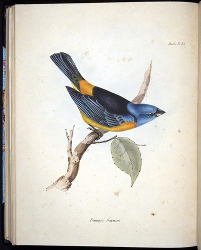 Image of Darwin-F8.2-1838-00096-f34