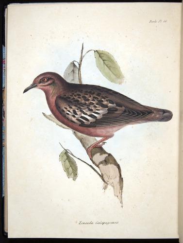 Image of Darwin-F8.2-1838-00114-f46