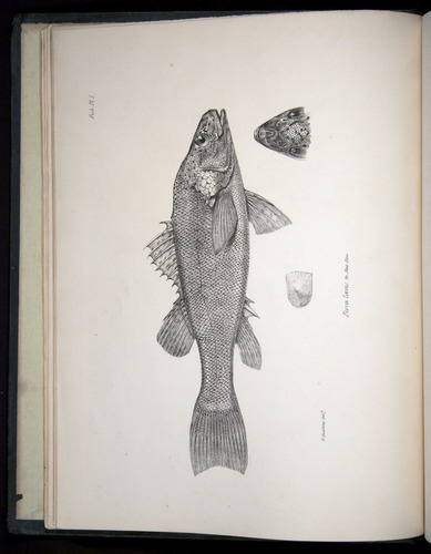 Image of Darwin-F8.3-1838-00000-z14-bf01