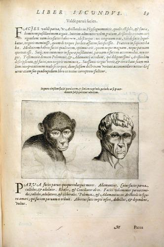 Image of DellaPorta-1586-89