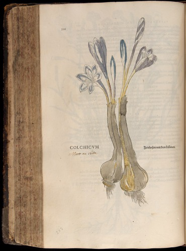Image of Fuchs-1542-356