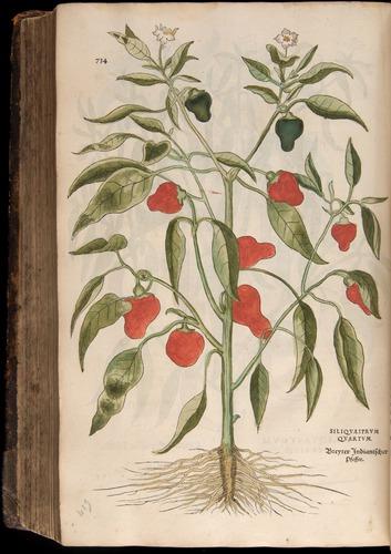 Image of Fuchs-1542-734