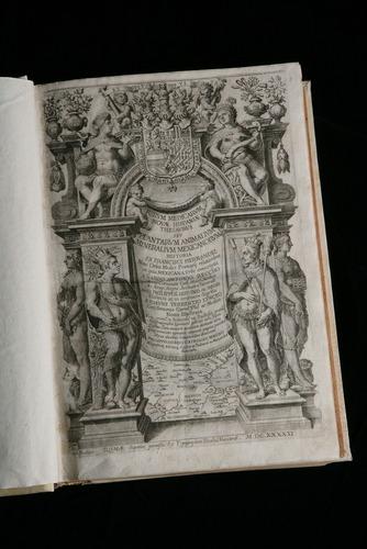 Image of G-19-Hern-1651-5