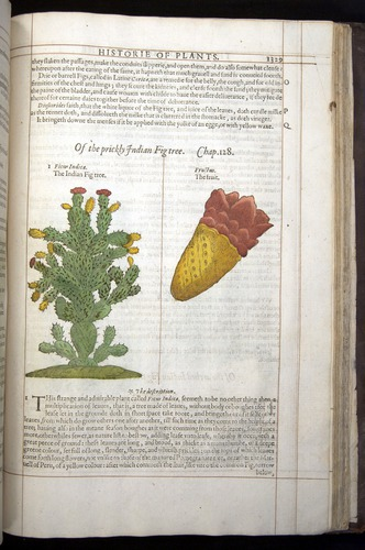 Image of Gerard-1597-1329