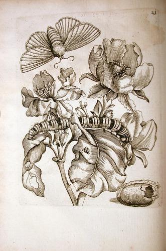 Image of Merian-1717-M-1-21