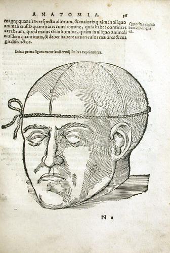 Image of MondinoDeiLuzzi-1541-n2r
