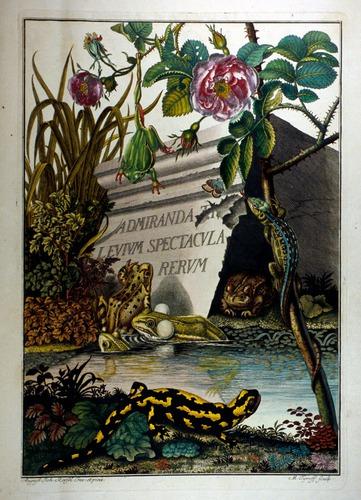 Image of Rosenhof-1758-tp