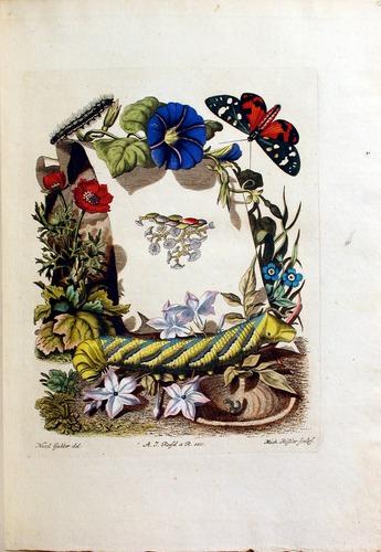 Image of Rosenhof-1788-3a-000-fp