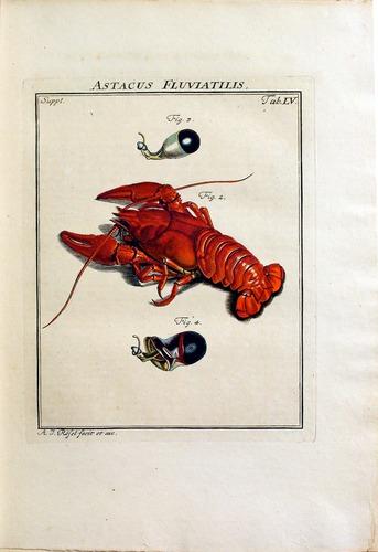 Image of Rosenhof-1788-3b-272-p
