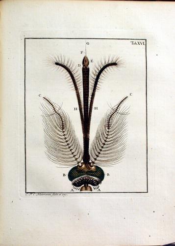 Image of Rosenhof-1788-S-126-p