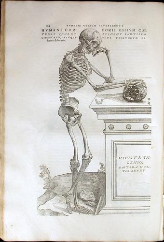 Image of Vesalius-1543-164