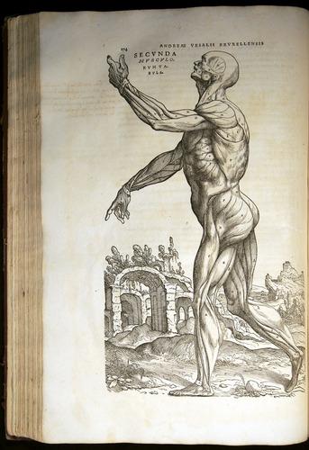 Image of Vesalius-1543-174