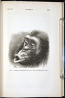 Darwin, Emotions (1872), chimpanzee