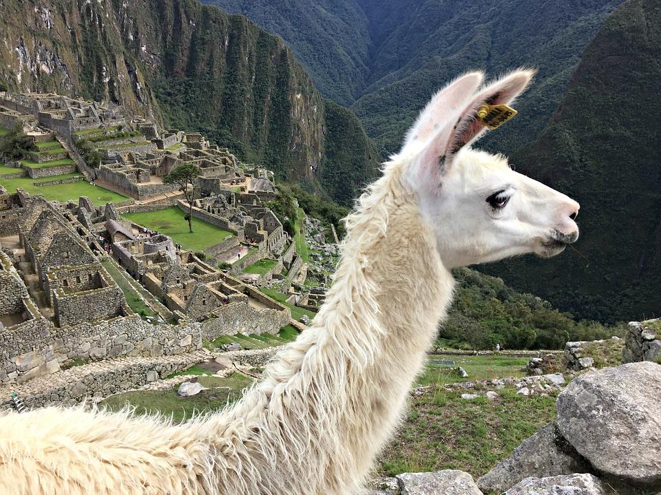 Inca-astronomy-Llama---underluckystars
