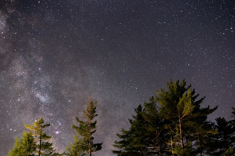 Tree-Nebula