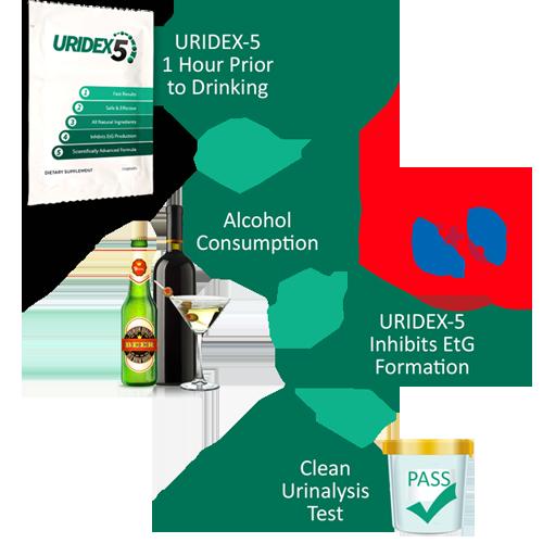 Uridex-5 Flowchart