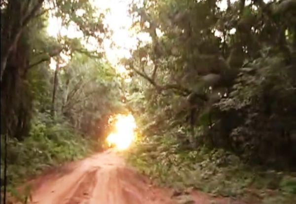 Segundo o IBGE, as matas nativas da Fazenda Santo Antônio e da Fazenda Moreira Sales (foto) estão dentro de Goioerê (Foto: Divulgação)