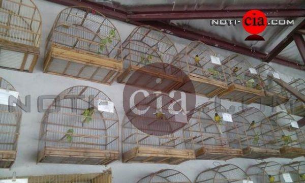 Acusado irá receber multa de R$ 500 por cada ave que era mantida em cativeiro (Foto: Noti-cia.com)