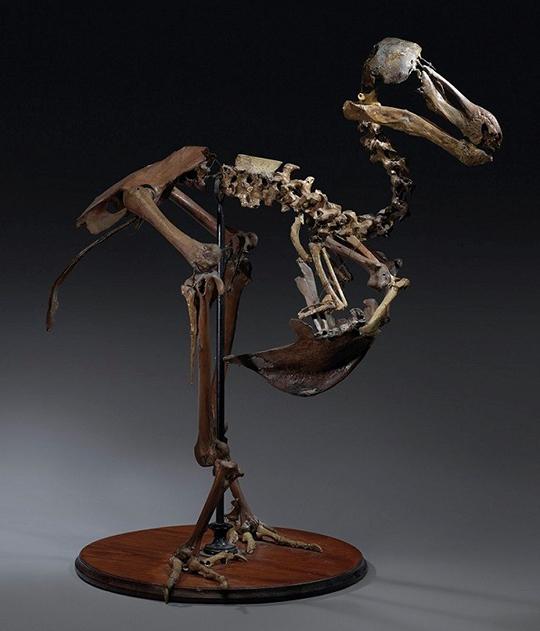 Dinasour Bones