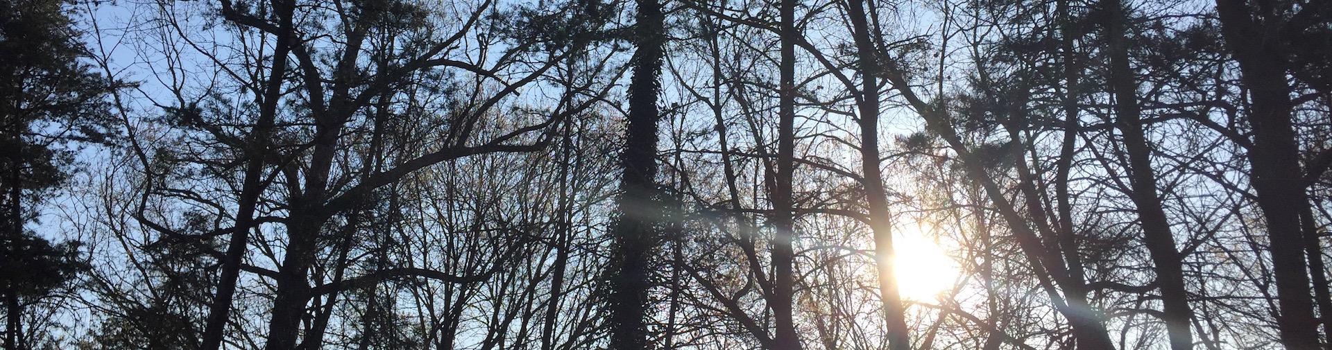 Trees 1920