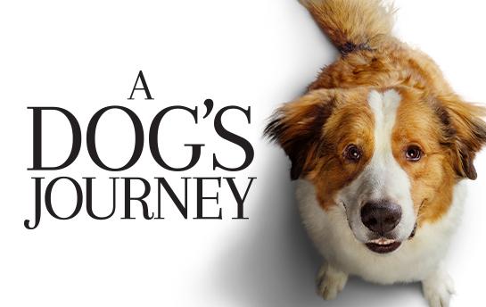 A Dog's Journey | Social Content
