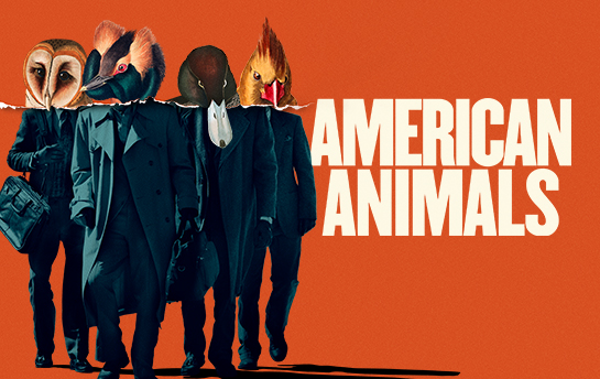 American Animals | Display Ad Campaign