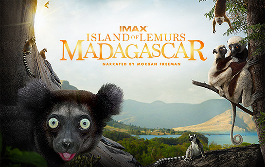 Island of Lemurs: Madagascar | HTML5 Game