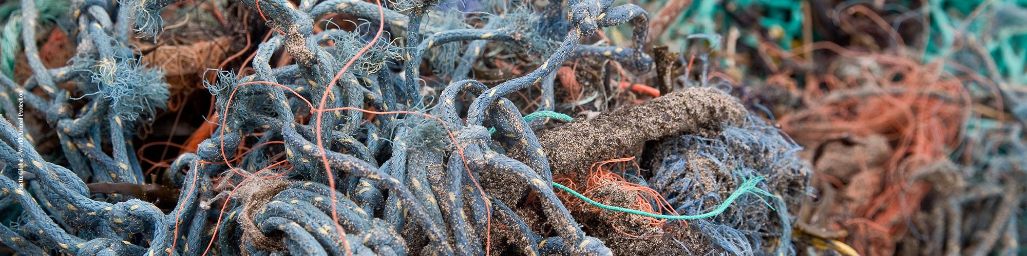 Oceano Plástico: lixo marinho e impacto na vida animal