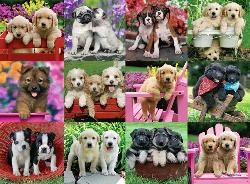 Puppy Pals Photography Jigsaw Puzzle