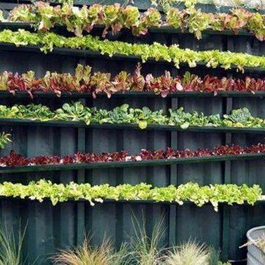 Indoor Vegetable Garden Workshop - 111 Jarvis Street, Toronto, ON ...