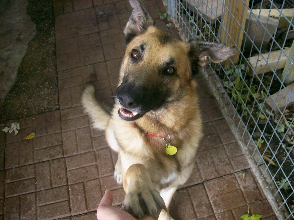 Home - GSD Haven