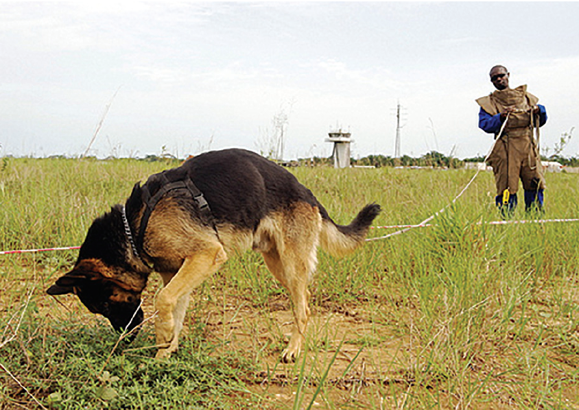 A demining dog with handler