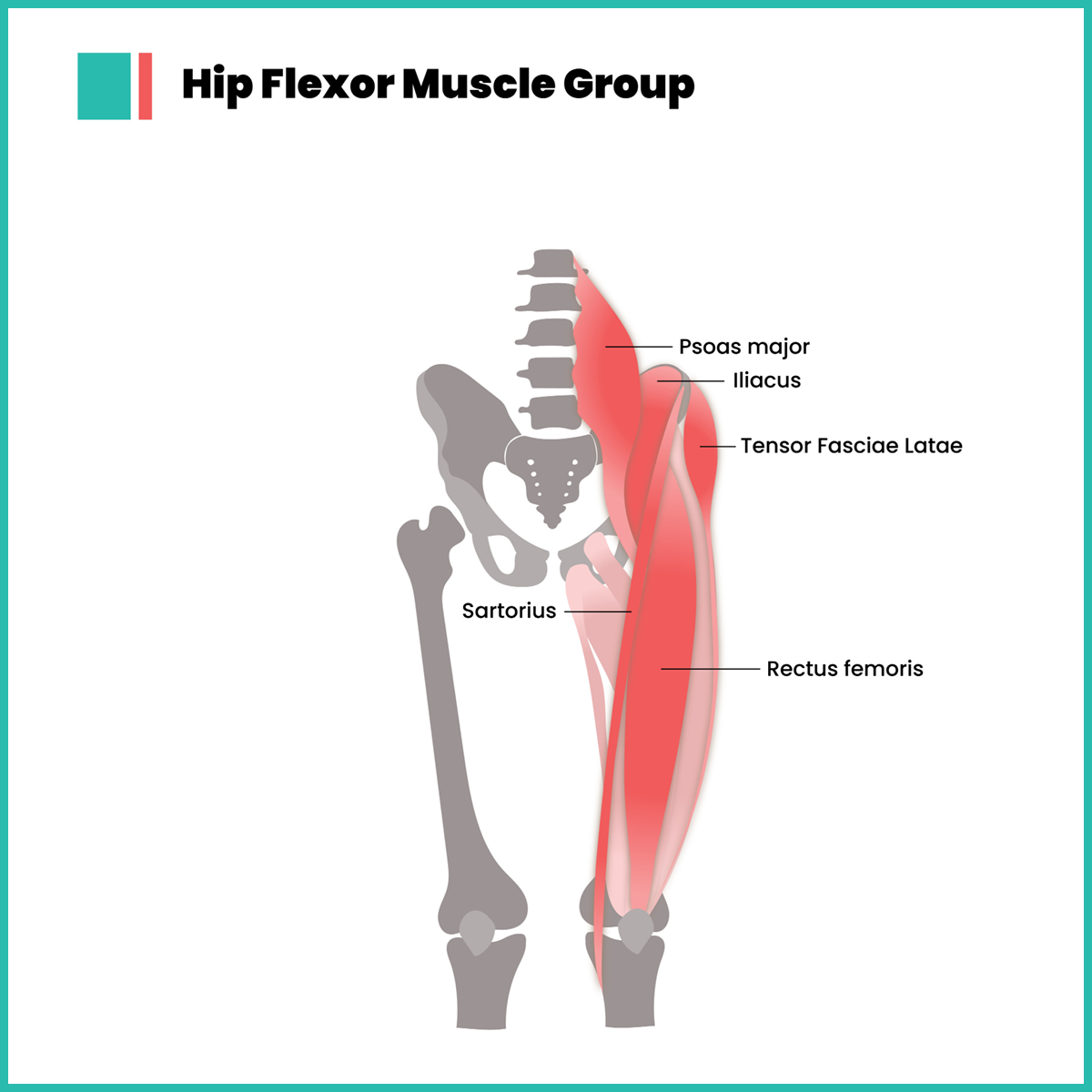 Infographic about hip flexors