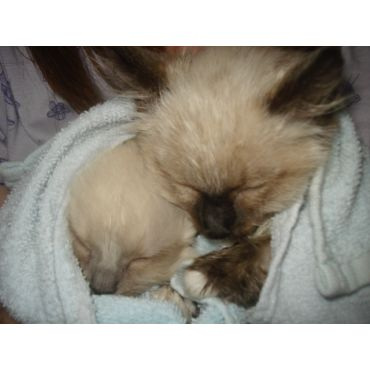 Cute Kittens Warming Up