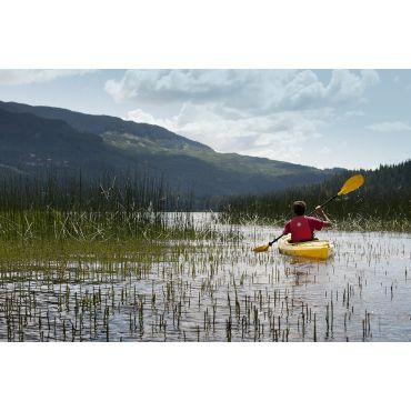 austin in reeds